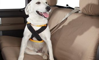 dog-car-seat-belt